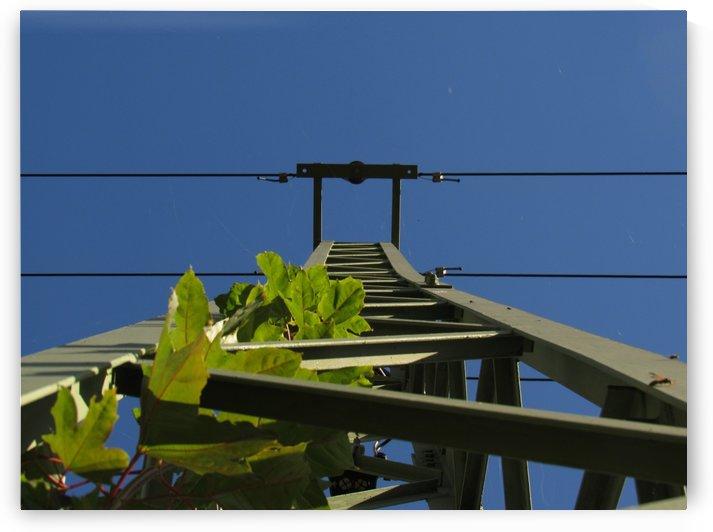 Electricity pole vs Nature by Jan Holecek