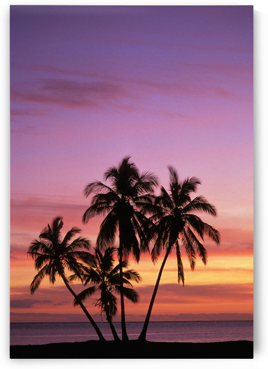 Hawaii, Molokai, Cluster Of Palm Trees With Beautiful Sunset Background. by PacificStock