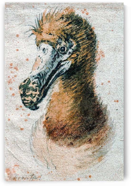 Dodo by Cornelis Saftleven