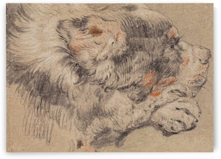 Head of a dog by Cornelis Saftleven