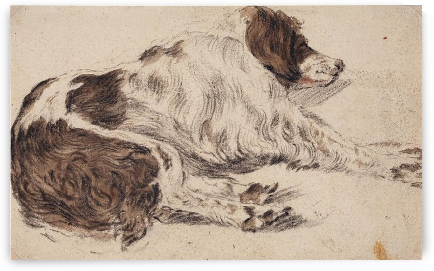 Sleeping dog by Cornelis Saftleven