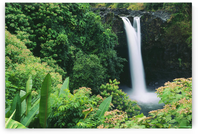Hawaii, Big Island, Hilo, Wailuku River State Park, Rainbow Falls, Flowers And Greenery In Foreground. by PacificStock