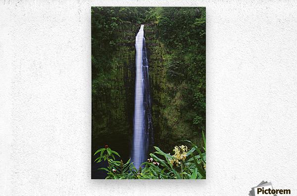 Hawaii, Big Island, Akaka Falls, Tropical Flowers Blooming In Foreground.  Metal print