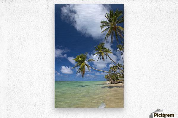 Hawaii, Palm Trees Lean Over Beach, Calm Turquoise Ocean, Dramatic Sky.  Metal print