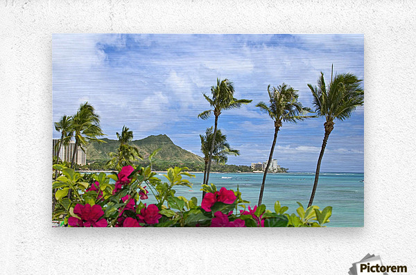 Hawaii, Oahu, Diamond Head, Waikiki, Palm Trees And Bougainvillea Foreground.  Metal print