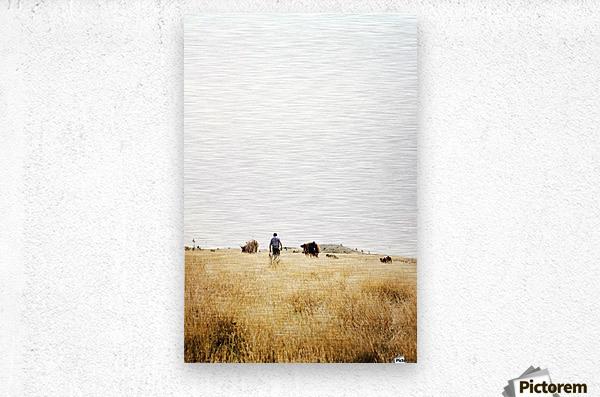 Cow man  Metal print