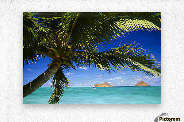 Hawaii, Oahu, Lanikai, Palm Tree Foreground, With Mokulua Islands Background, Sailboat In Turquoise Waters.  Metal print