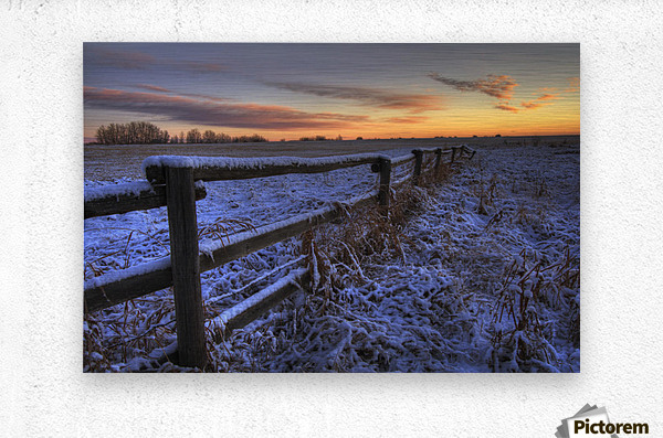 Early Morning Snow On A Cattle Fence, Rural Alberta  Metal print