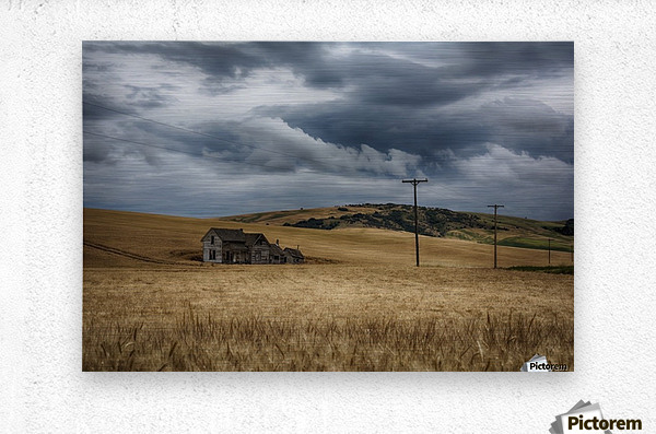 Old, rustic wooden house in the middle of a golden field under a stormy sky; Palouse, Washington, United States of America  Metal print