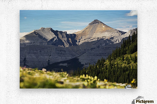 Mountain range with wildflowers on hillside in the foreground and blue sky; Bragg Creek, Alberta, Canada  Metal print