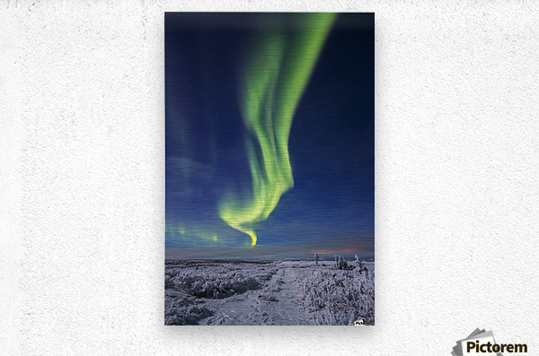 The aurora borealis shines above an ATV trail covered in snow, south of Delta Junction; Alaska, United States of America  Metal print