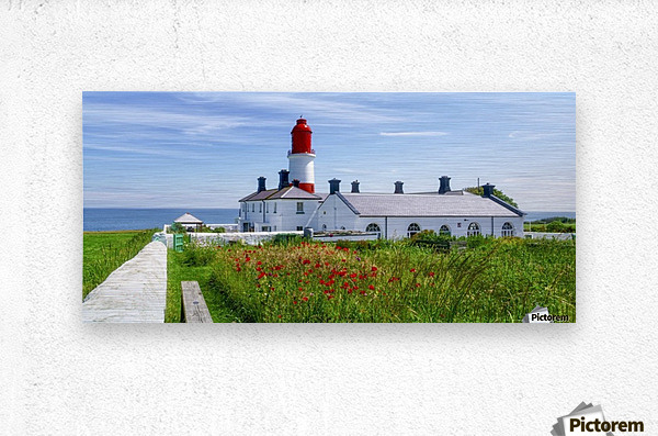 Souter Lighthouse with a field of red poppies in the foreground; South Shields, Tyne and Wear, England  Metal print