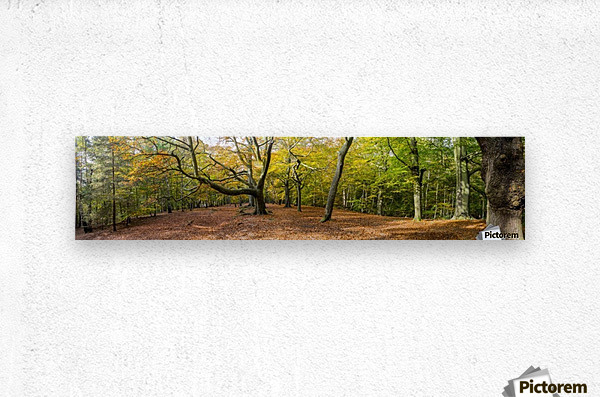 Panorama of a forest in autumn colours; Surrey, England  Metal print