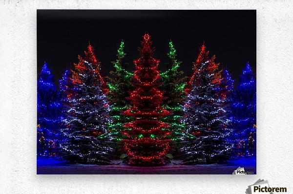 Colourful Christmas lights around several evergreen trees; Calgary, Alberta, Canada  Metal print