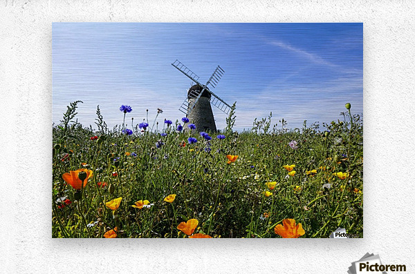 A windmill against a blue sky and cloud with a field of wildflowers in the foreground; Whitburn, Tyne and Wear, England  Metal print