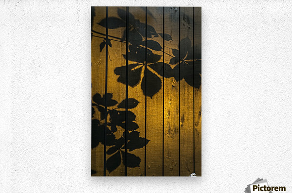 Shadows of tree branches and leaves cast on a wooden fence; Gateshead, Tyne and Wear, England  Metal print