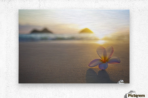 A pink plumeria flower sits on the sand of Lanikai Beach in Kailua with a view of Mokulua twin islands and the ocean at sunset in the distance; Kailua, Oahu, Hawaii, United States of America  Metal print
