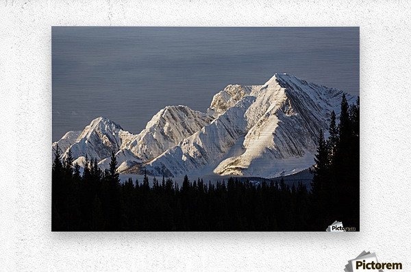Snow covered mountains with early morning light, silhouetted forest in the foreground, blue sky and clouds; Kananaskis Country, Alberta, Canada  Metal print
