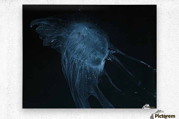 Glowing blue jellyfish in the dark water  Metal print