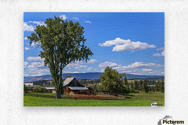 Beef cows rest in the shade of the barn roof under a blue sky with fluffy white clouds in the summer in the North Okanogan; British Columbia, Canada  Metal print