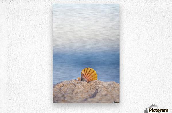 A rare rainbow color Hawaiian Sunrise Scallop Seashell, also known as Pecten Langfordi, in the sand at the beach at sunrise; Honolulu, Oahu Hawaii, United States of America  Metal print