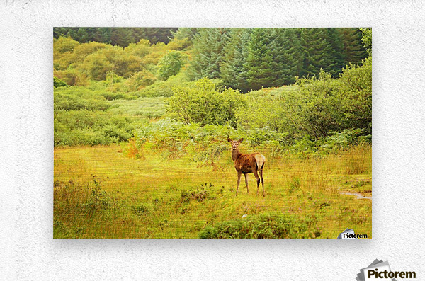 Caught in the open  Metal print