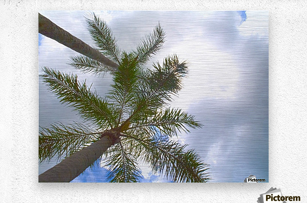 HDR Palm trees looking up against a cloudy sky  Metal print