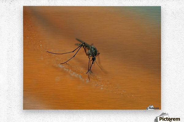 Mosquito!  Metal print