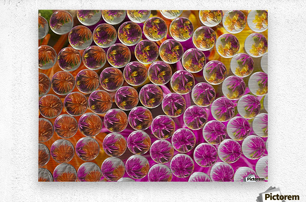 FLOWERS REFRACTION 5  Metal print