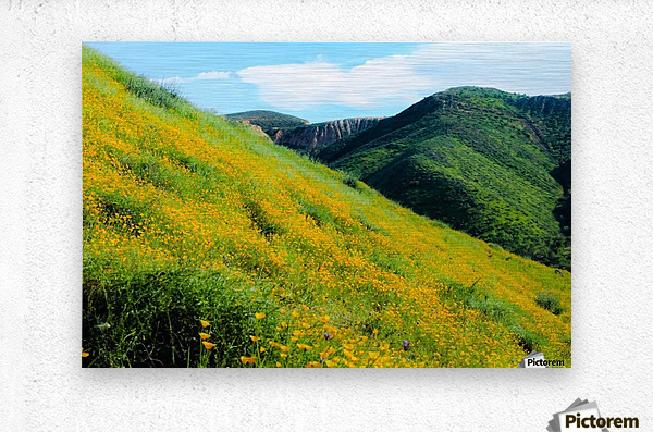 yellow poppy flower field with green leaf and green mountain and cloudy blue sky in summer  Metal print