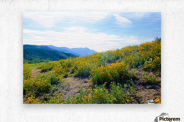 yellow poppy flower field with green leaf and blue cloudy sky in summer  Metal print