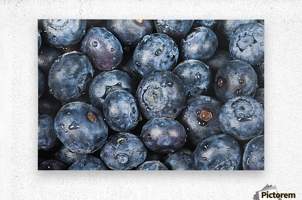 Close up shot of several fresh blueberries.  Metal print