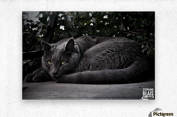 Charlie the Cat  Metal print
