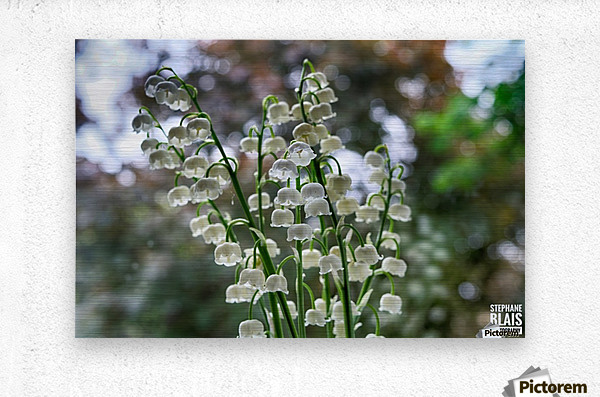 Thrush Flowers  Metal print