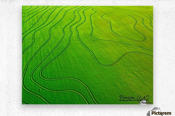 Carlisle, AR | Arkansas Rice Field  Metal print