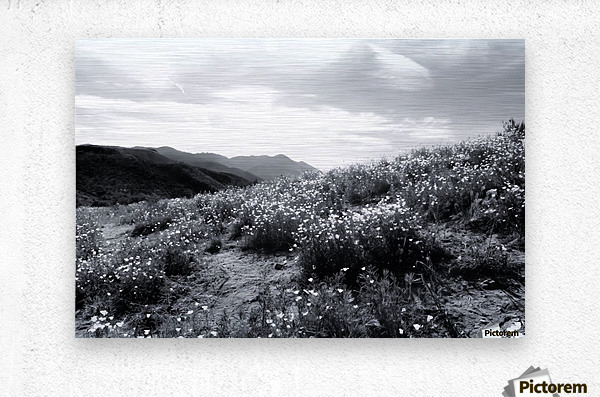 poppy flower field with mountain and cloudy sky in black and white  Metal print