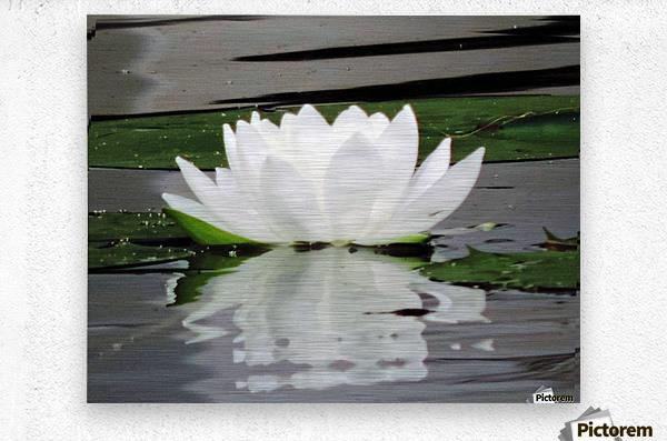 FloweringLilyPad  Metal print