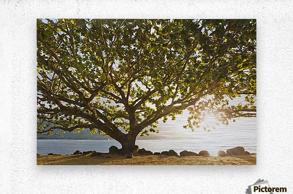 Hawaii, Kauai, Hanalei Bay, Large tree on beach, Sun shining.  Metal print