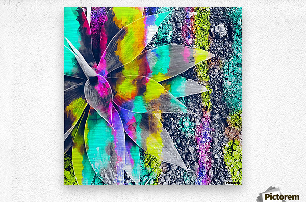 succulent plant with painting abstract background in green pink yellow purple  Metal print