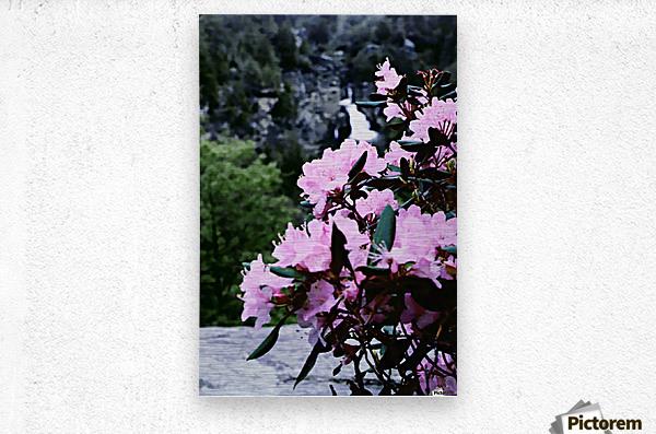 Flowers and Falls  Metal print