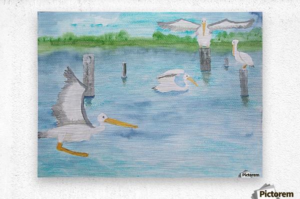 Pelicans in a coastal inlet.  Metal print
