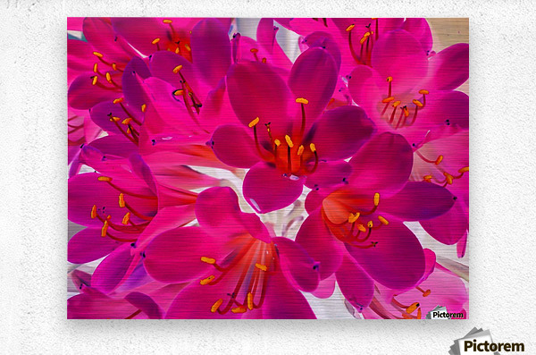 closeup pink flower texture abstract background with orange pollen  Metal print