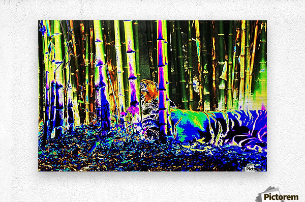 Tiger in a bamboo grove.  Metal print