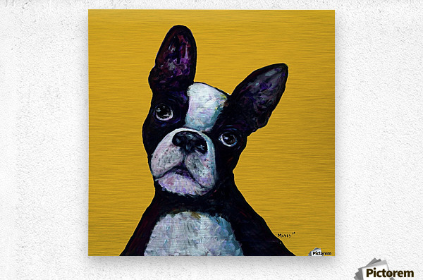 BOSTON TERRIER ON YELLOW  Metal print