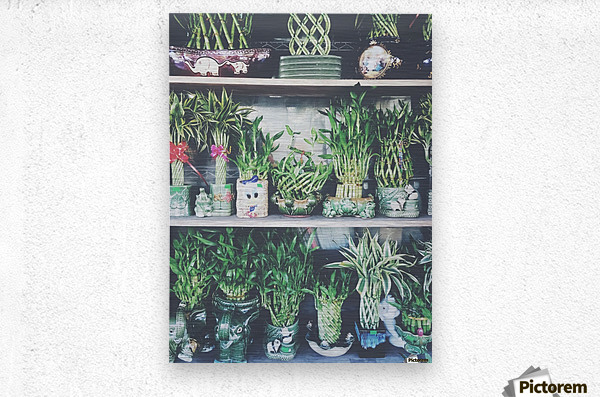 green bamboo plant in the vase pattern background  Metal print
