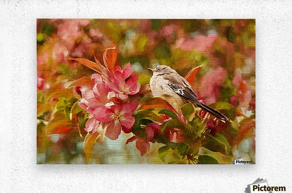 Sparrow In The Apple Tree  Metal print