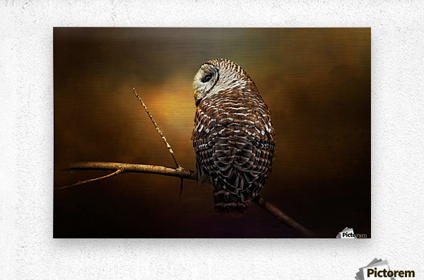 Textured Strix Varia  Metal print