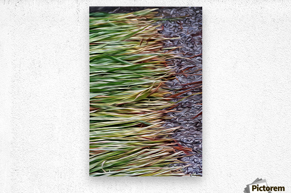 Cut Grass and Pebbles  Metal print