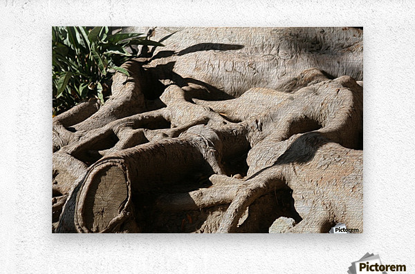 Signed Tree Roots  Metal print