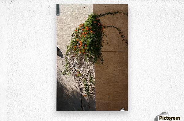 Wall Vines on Edge  Metal print